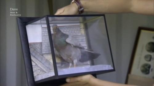 stuffed pigeon